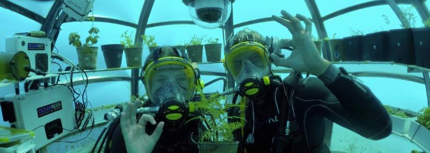Базилик из подводных капсул