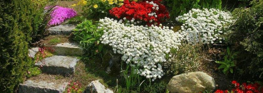 Альпинарий у вас в саду