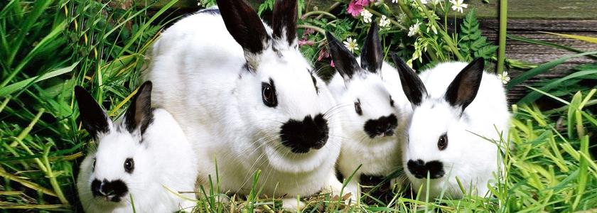 Чтобы кролики не болели