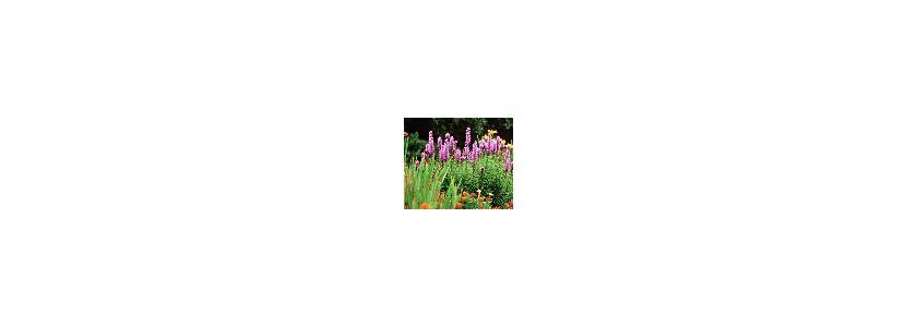 Миксбордеры - цветочные бордюры