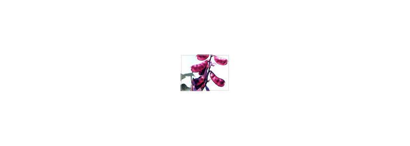Великолепные лианы. Вьющиеся растения в вашем саду.