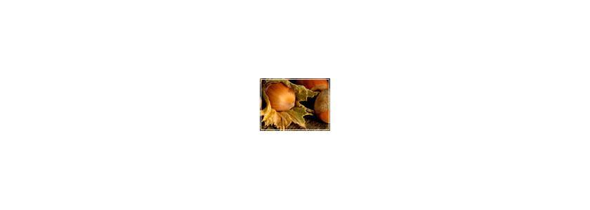 Лещина. Пурпурные листья, золотые ядра