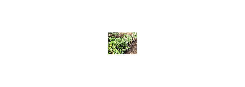 Формовое садоводство. Выращивание плодовых деревьев в искусственных формах