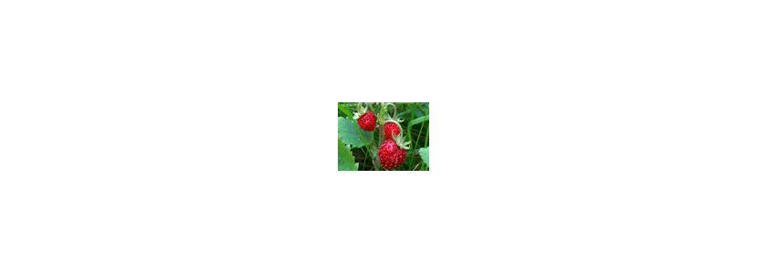 Правильная высадка ягод