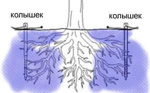 колышки для полива деревьев