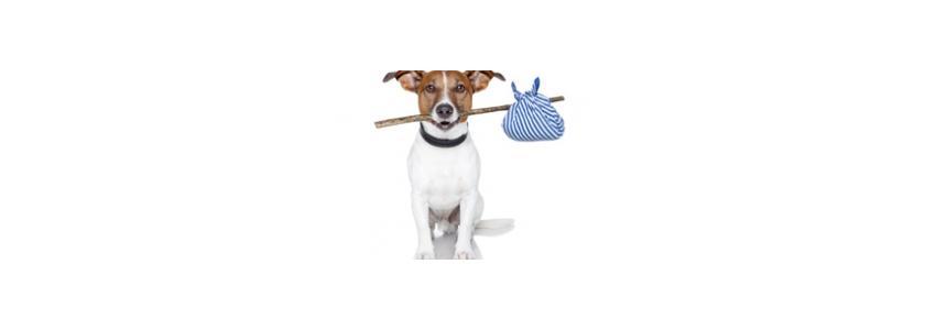 Перевозим домашних животных на дачу