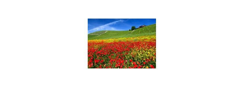 В июне день с год: календарь садовода-огородника