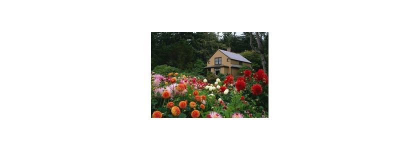 Как наполнить сад ароматами? Советы форумчан