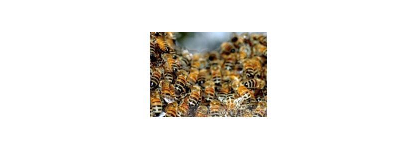 На зимовку. Пчеловоды форума готовят свои пасеки к зиме