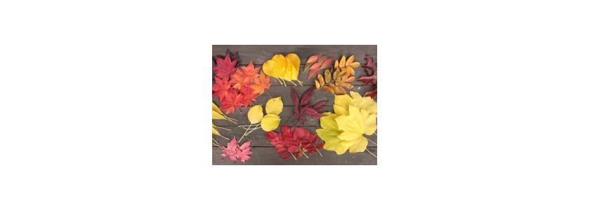 Прощальная краса: что украсит сад глубокой осенью?