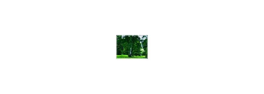 Одерновка - создание газонов при помощи укладки рулонов готового дёрна.