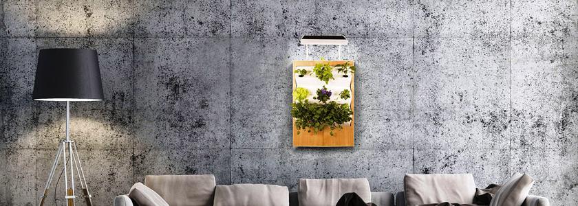 Домашний гидропонный сад как способ вырастить в квартире экологически чистые продукты