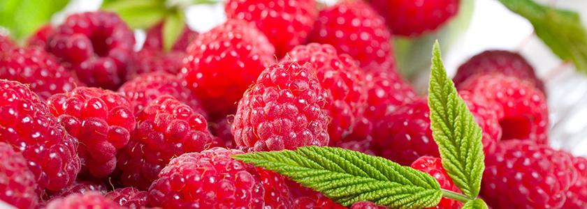 Не жизнь, а малина! Выращивание ягоды