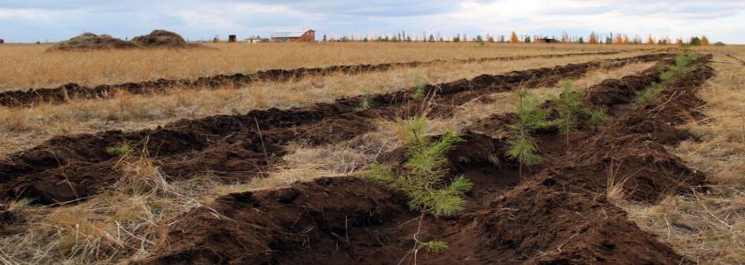 Дерновая, листовая, перегнойная – о видах почв