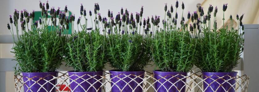 Цветы в горшках и подвесных корзинах