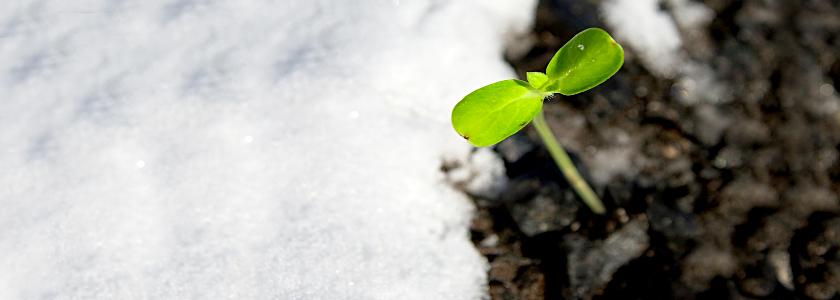 Закаливание основных овощных культур – с первых дней до высадки в ОГ
