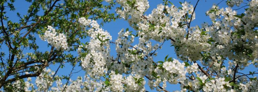 Как посадить плодовый сад весной