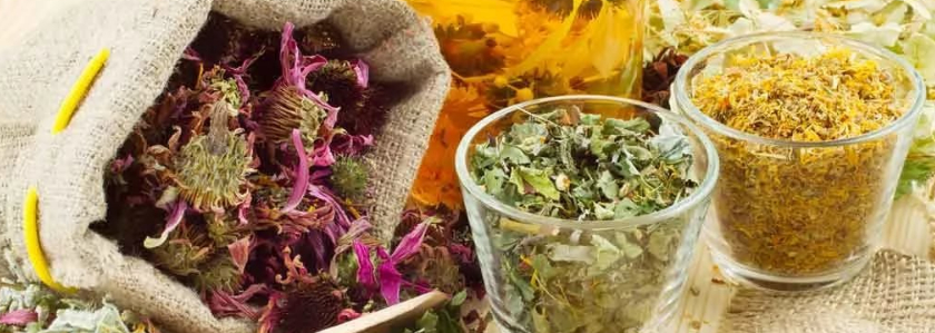 Пять лучших растений, способных вылечить простуду