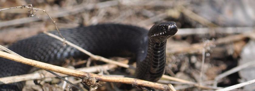 Как избавиться от змей на участке