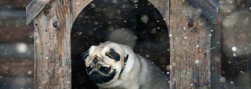 Утеплитель для собачьей будки: выбор материалов, обогревательные приборы