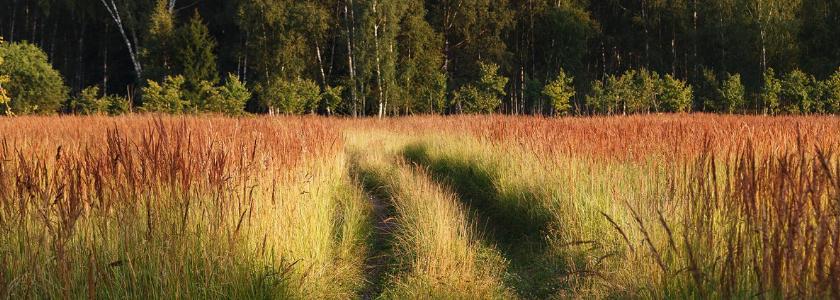 В национальных парках будут выделять участки под ИЖС, а «взамен» увеличивать охранные территории