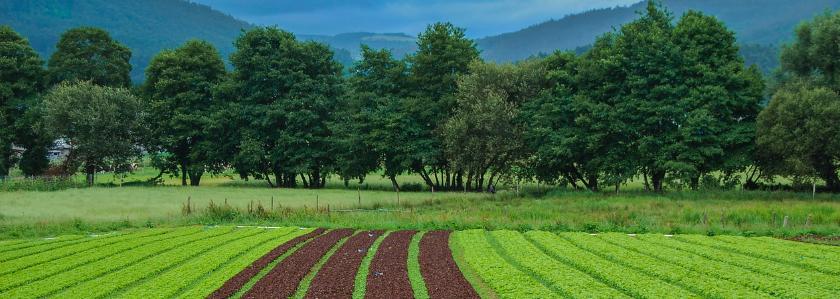 Органический запрет: появится новая категория земель, которую нельзя застраивать