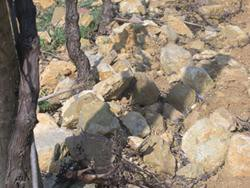 известняковая почва