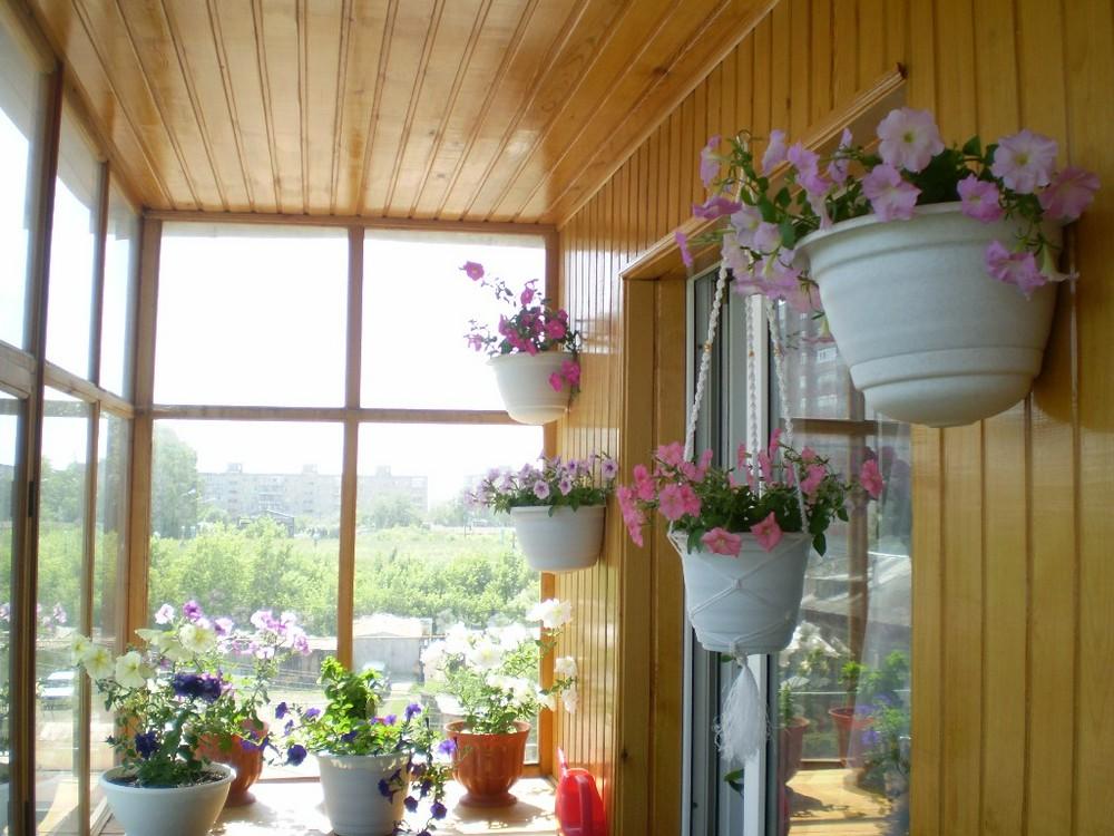Как вырастить петунию из семян в домашних условиях. Размножение петунии