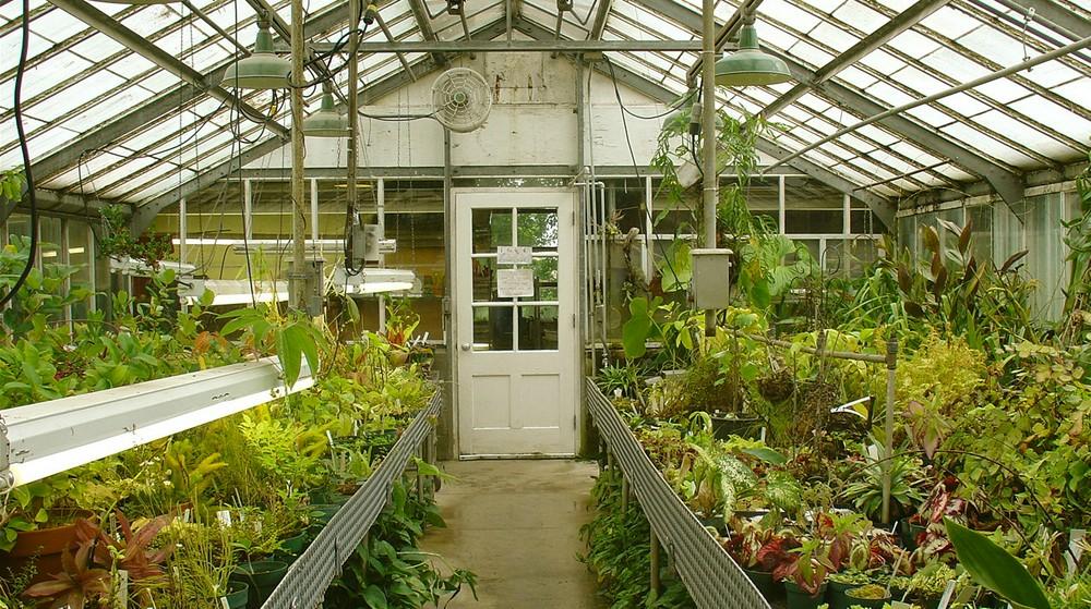 Зимняя теплица – особенности конструкции, обустройства и эксплуатации, культивируемые растения