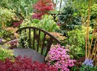Ландшафтный дизайн. Выбираем растения