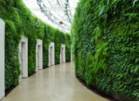 Лучший туалет – стена из растений