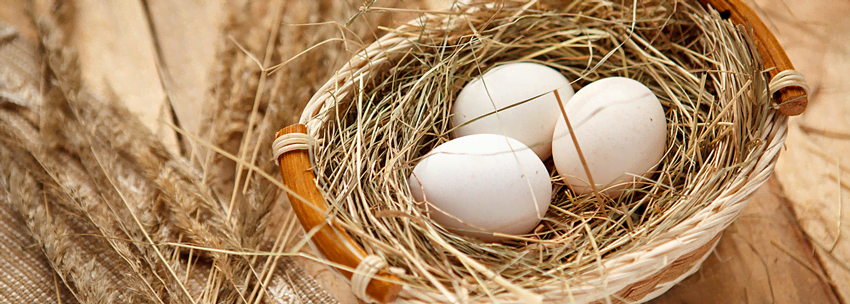 Яйца без сальмонеллы – пять простых шагов
