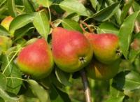 Веб-фрукты – всем, даром и пусть никто не уйдет без урожая!