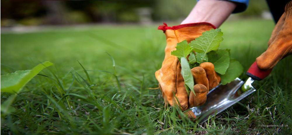 Только цветы: как избавить клумбу от сорняков