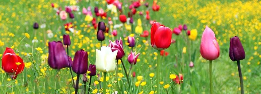 Газон с цветами: особенности выращивания