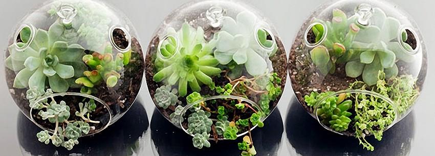 Три решения для домашнего сада