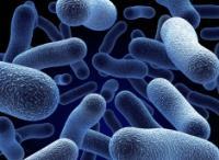 Бактерии на службе урожая