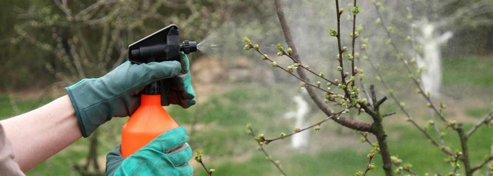 Ягодный бум, или как ухаживать за плодовыми растениями