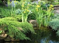 Эко-сад: как стать ближе к природе вместе с компанией «Арт-Грин Дизайн»?