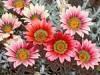 Декоративные цветы. Обзор однолетников