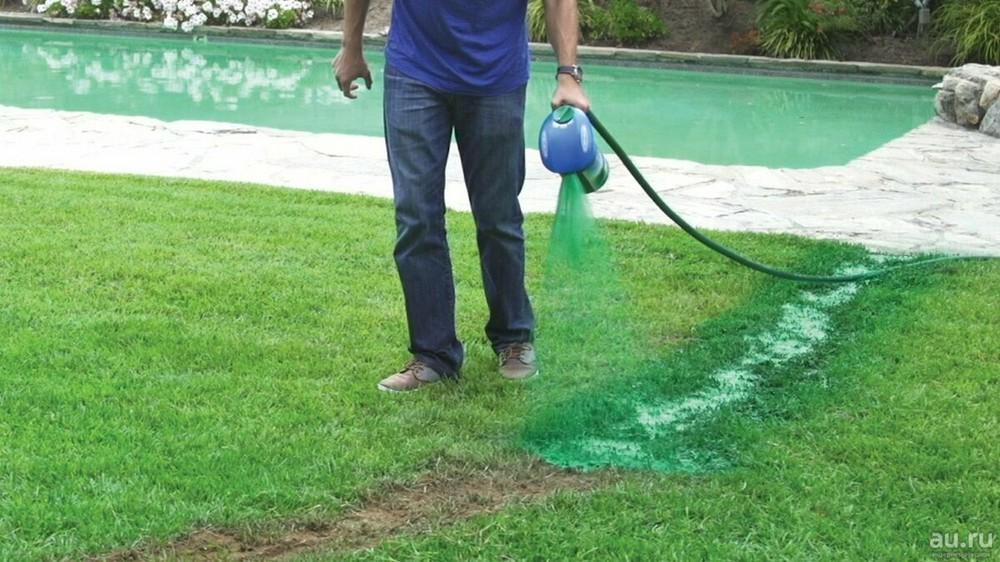 Жидкий газон на даче своими руками: технология гидропосева