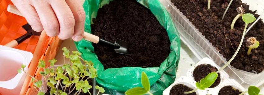 Земля для рассады: покупаем и составляем сами