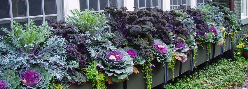 Комбинации растений для контейнеров: примеры удачных решений