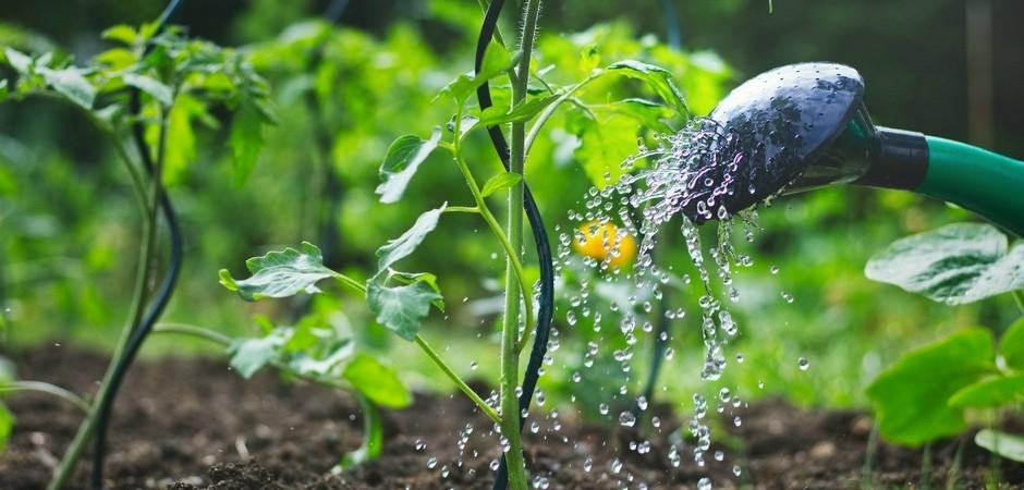Эксперты рассказали, как поливать огород в жару